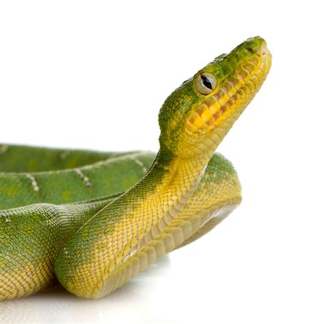 Pet Snakes - Learn About Nature