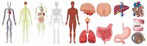 Set Of Human Anatomy And Systems