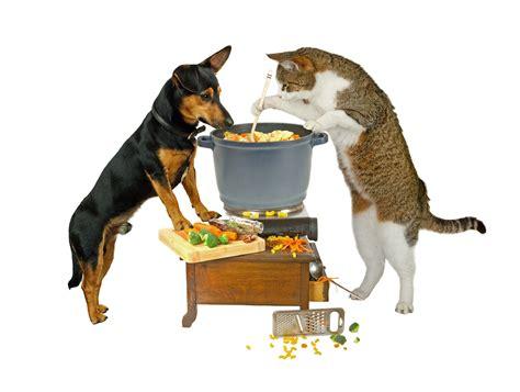fakten ueber futter ernaehrungsberatung fuer hund und katze
