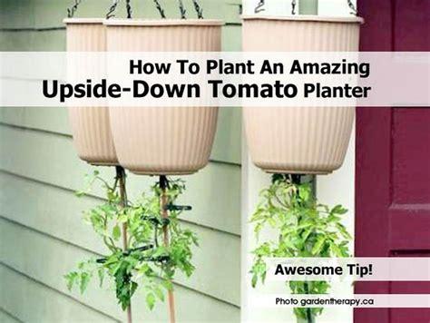 How To Plant An Amazing Upsidedown Tomato Planter
