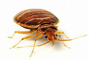 bed bugs in schools the creepy truth publicschoolreviewcom With bed bugs in schools