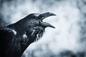 Birds as Omens and Signs - EverydayKnow.com