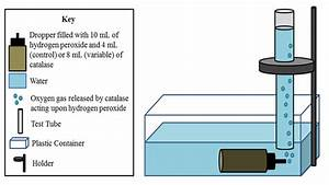 Enzyme Catalysis Lab  Enzyme Catalysis  Lab Quiz Answers  2019