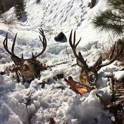 entiat bucks wdfw wasted reward poached info 2000 nwsportsmanmag