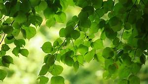 Beautiful, Green, Leaves, And, Bright, Stock, Footage, Video, 100, Royalty