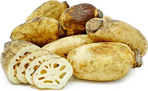 Lotus Root Information, Recipes And Facts