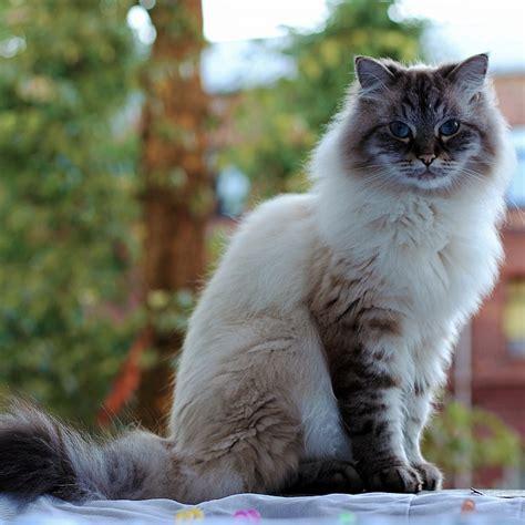 cat animals cats  photo  pixabay
