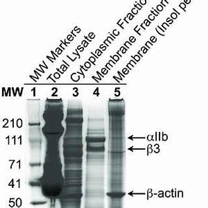 (PDF) Proteomic and Phospho-Proteomic Profile of Human ...
