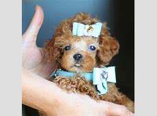 Puppies For Sale In Los Angeles California