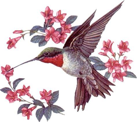 oiseau et couronne de fleurs oiseaux divers