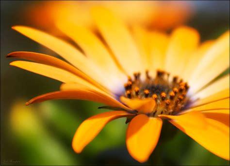 lovely flower photographs stockvaultnet blog