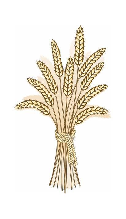 Harvest Wheat Grain Clipart Clip Clipground Cliparts