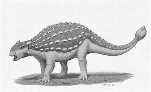 Ankylosaurus Facts And Pictures
