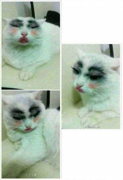 Crying Cat Meme - image gallery kitty crying meme