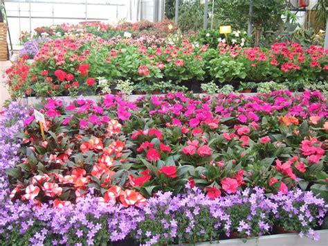piante fiorite perenni da giardino piante e fiori casette tettoie pergole in legno box