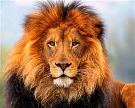 segno zodiacale del leone tutte le caratteristiche del segno