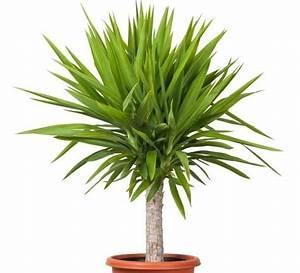 Schimmel In Pflanzen : pflanzen f rs bad die besten profi tipps auf einen blick ~ Bigdaddyawards.com Haus und Dekorationen