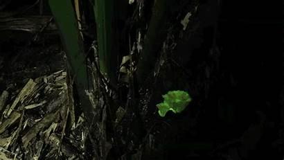 Lapse Usp Mushrooms Glow Cassius Stevani Iq