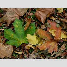 Green And Brown Leaves On Ground Photography