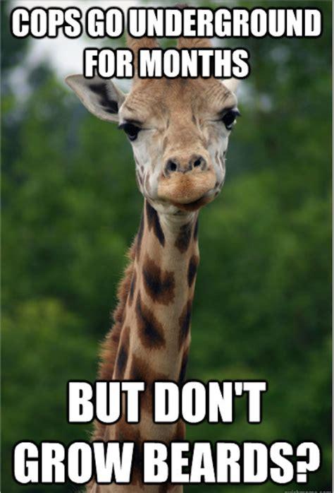 Giraffe Meme - giraffe meme that is a duck