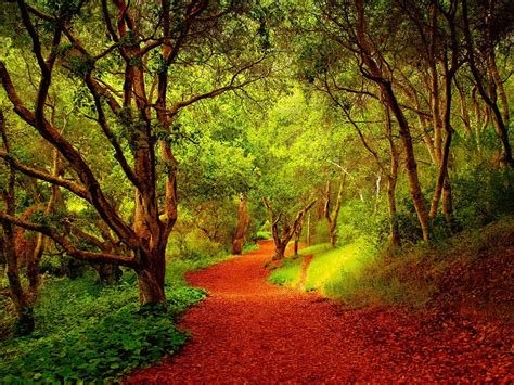Beautiful Forest Pathway 03846 : Wallpapers13.com