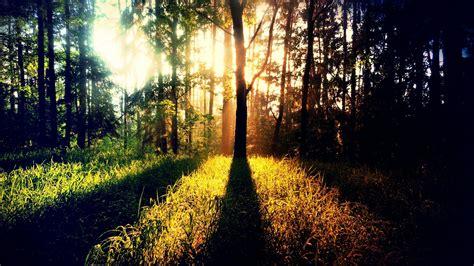 sunshine images photography hd desktop wallpapers  hd