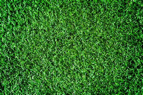 Bodendecker Für Lehmboden by Rasenersatz 187 Pflanzen Und Pflegen