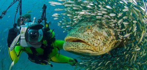 grouper goliath diver florida swimming magazine super hakai season iammrfoster
