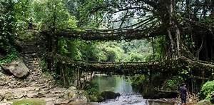 Die Wurzeln Der Welt : br cken aus lebenden baumwurzeln in indien ~ Watch28wear.com Haus und Dekorationen