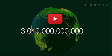 How Many Are In The World by Counting And Counting On The World S Trees