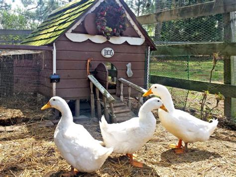 A Guide To Duck Houses Hgtv