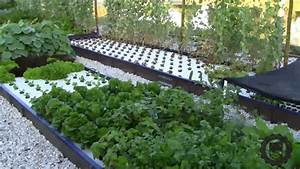 Introduction To The Aes Aquaponics System
