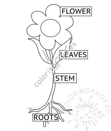 parts plant spring preschool worksheet coloring page