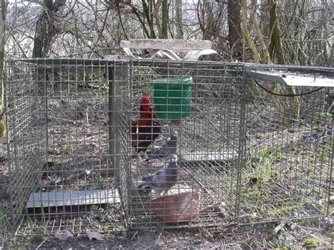 piege a pigeon fait maison 28 images chasse fabrication de pi 232 ge pi 232 ge 224 oiseaux