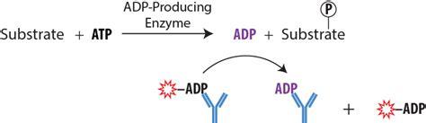 One Way to Accelerate Biochemical Assay Development ...