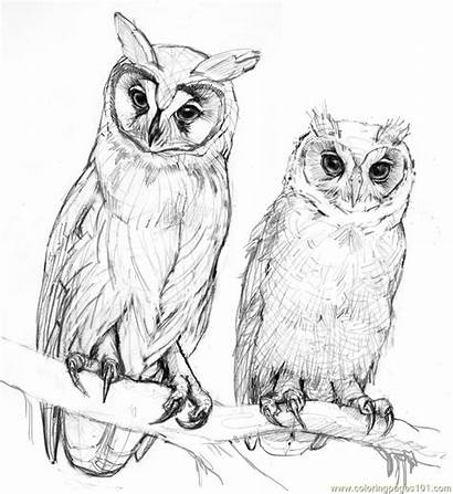 Owl Coloring Pages Drawings Owls Pencil Printable