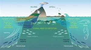 Island Conservation Ocean Oases  How Islands Support More Sea Life