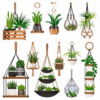 Hanging Vector Planter Background Illustrations Plants Clip