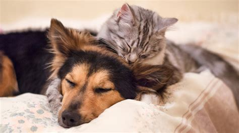 Dog And Cat Relationships