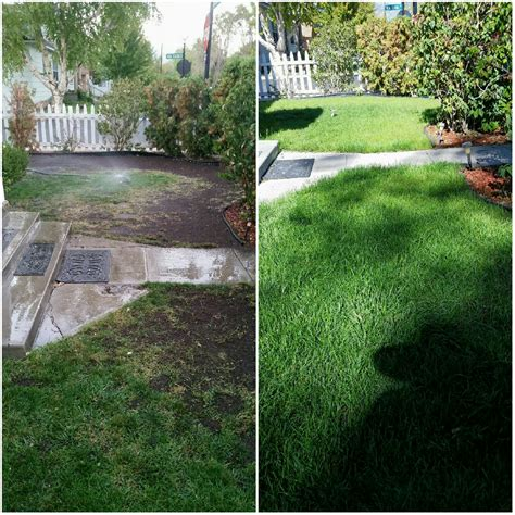 best time to re sod time to seed or sod your yard do it right and easy with full circle s best compost in nevada