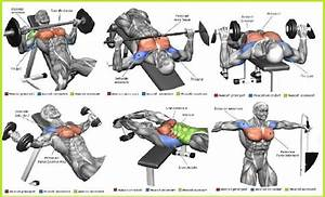 The Top 5 Chest Muscle Exercises