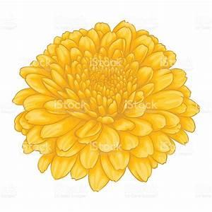 Beautiful Yellow Chrysanthemum Flower Effect Watercolor ...