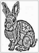 Coloring Rabbit Adult Realistic Boys Printable Colouring sketch template