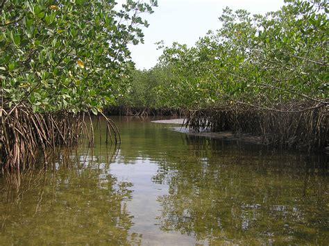 experts develop africas highest quality mangrove maps