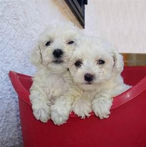 cucciolo taglia piccola cani in vendita e in regalo in