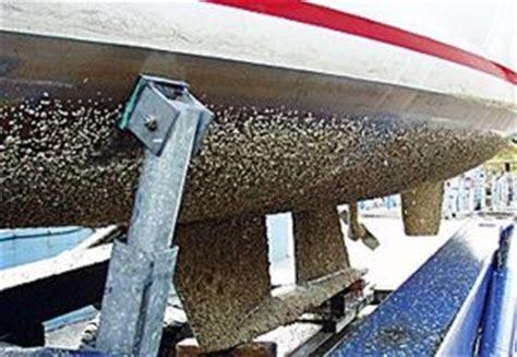 Aangroei Polyester Boot Verwijderen by El Antifouling Equipamiento A Bordo