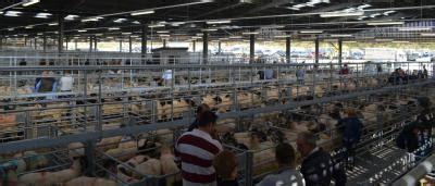 holsworthy livestock market devon kivells