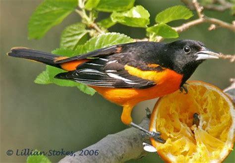 birding is fun the 10 most beautiful birds