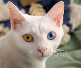 different cats eyed cat