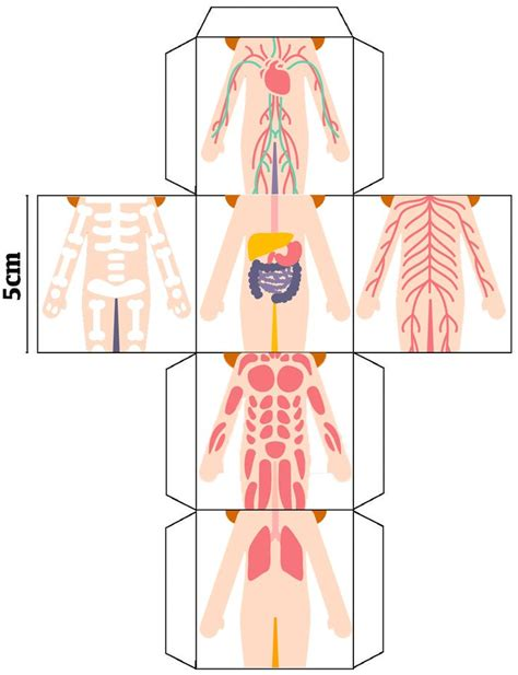 25 best ideas about aparatos cuerpo humano on